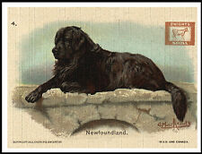 NEWFOUNDLAND LOVELY VINTAGE STYLE DOG ADVERT PRINT POSTER