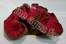 AQUARIUM PINK ROSE CORAL ORNAMENT, MARINE FISH TANK, REEF DECOR