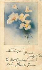 The Sego Lily Utah's State Flower Undivided Postcard