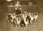 ROUGH COLLIE LADY WITH HER DOGS LOVELY VINTAGE IMAGE ON DOG GREETINGS NOTE CARD