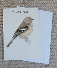 CHAVFINCH chaffinch Blank Greetings Card
