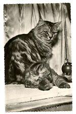 vintage cat postcard real photo beautiful tabby cat & kitten sat in window 1960