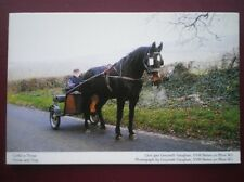 POSTCARD D2-2 ANIMALS HORSE & TRAP IN WALES