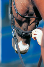Prolite Noseband Cushion Pad, Pressure Relief, Black,One Size, Prevents Pinching