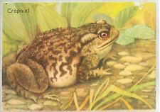 Crapaud commun Bufo bufo Common toad IMAGE CARD 1951