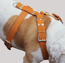 """High Quality Leather Walking Dog Harness 33""""-37"""" chest 1.5"""" wide Straps Tan"""