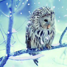 Frosty Owl on Branch- 10 pack Charity Christmas Cards Brain Tumour Research