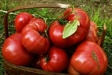 Pink Brandywine Heirloom Tomato Seeds- 75+ 2017 seeds        $1.69 Max Shipping