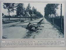 1914 DEAD WAR HORSE ON HAELEN ROAD; OCCUPIED BRUSSELS WWI WW1