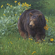 """Scent of Spring"" Daniel Smith Western Fine Art Giclee Canvas - Black Bear"
