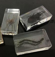 3 Vintage REAL INSECTS Spider Beetle PAPERWEIGHT IN acrylic resin