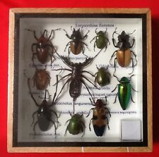 REAL EXOTIC HUGH 11 INSECT DISPLAY TAXIDERMY ENTOMOLOGY SCORPION BEETLE INSECTS