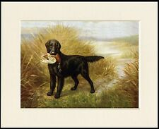 FLAT COATED RETRIEVER AND MALLARD LOVELY DOG PRINT MOUNTED READY TO FRAME