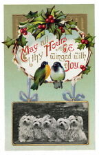 c1900 Christmas~Birds on Holly Branch~Five Maltese Puppy Dogs~NEW Greeting Cards