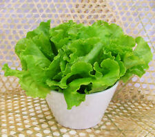 100 Lettuce Seeds Butter Lettuce Lactuca Sativa Organic Vegetables C009