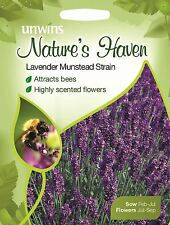 Unwins Pictorial Packet - Natures Heaven Lavender Munstead Strain - 150 Seeds