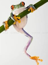TREE FROG GREEN CLIMBING PHOTO ART PRINT POSTER PICTURE BMP648A