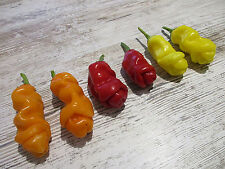 ''Lustiger Penis-Chili Mix'' 3 Farbig in 3 Sorten 30 Samen Peter Pepper Chili