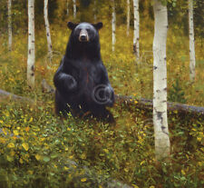 Lazy Afternoon by Kyle Sims Art Print Poster Black Bear Wildlife Decor 13x19