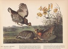 "1942 Vintage AUDUBON BIRDS #186 ""PRAIRIE CHICKEN"" WOW Color Art Plate Lithograph"