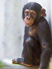 Photo Chimpanzé Chimpanzé Mignon Bébé mâcher Carotte Grandes ART PRINT POSTER lf1681