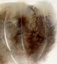 """15 Substitute Hawk/ Falcon Imitation Feathers, brown & cream, 2.5 - 4""""Long"""