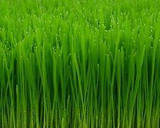 1/2 Pound Oatgrass & 1/2 Pound Wheatgrass Catnip Wheat Oat Grass Catgrass Pet