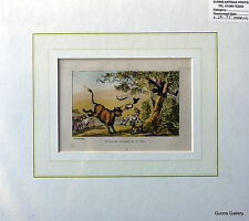 Antique Print Thomas Rowlandson mounted Dr Syntax Pursued by a Bull