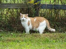 Cat Photo GIFT HELP care & feed cats and kittens small family run shelter in KY