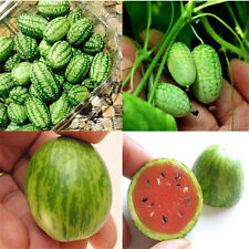 10pc Cucamelon Mini Watermelon Red Miniature Seeds Fruit Plant Home Garden Decor