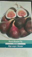 BLACK MISSION FIG TREE Live Plant Fruit Trees Healthy Figs Plants Home Garden