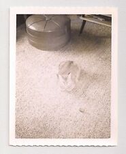 Fat Kitty Cat Camouflaged by Carpet Vintage Photograph