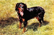 B15937 Chiens Dogs Russia