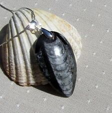 Beautiful Polished Orthoceras Fossil Pendant with Silver Plated Chain
