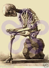 Vintage/Art Print/Poster/Illustration/ 5x7 inch/ Sitting Skeleton  C. 1867