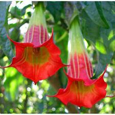 50 semi di datura multicolore + guida coltivazione omaggio