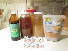 WATER KEFIR GRAINS 1/2 Cup for $10 || Live Organic Probiotic Culture Tibicos