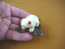 tn-frog-600) Red eyed Tree FROG frogs TAGUA NUT Figurine Carving Vegetable ivory