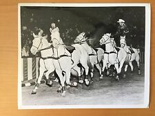 VINTAGE HORSE CIRCUS: Texas White Horse Troupe Performing in the Big Tent Photo