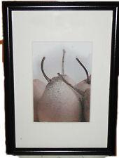 Stampa con cornice cm. 21x30  tema Frutta