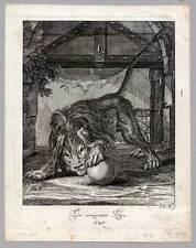 Löwe-Tiere-Lion Ridinger Kupferstich 1738 Raubtiere