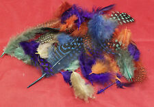 Feathers Art & Craft