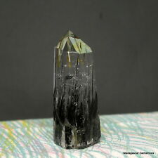"2.98"" Black Tourmaline Included Quartz Crystal Shcorl Tourmalated Point, Tmq34"