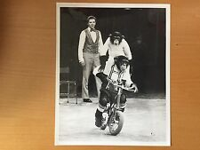 RARE VINTAGE AMSTERDAM CIRCUS ACT: Willy Lenz Chimps - Monkeys on Bicycles Photo