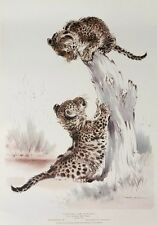 Leopard Cubs playing, Ralph Thompson print -39x56cm vintage 1967 leopard poster
