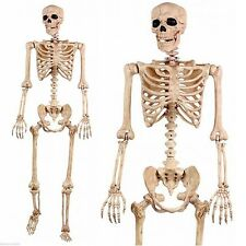 5' Pose N Stay Life Size Skeleton - Halloween Decoration