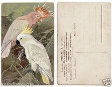 perroquet cacatoes.crete cockatoo parrots