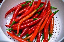 Pepper  Seeds ~ Hot Chili Cayenne ~ Lots of Heat ~~ theseedhouse ~~~~~ 20+ Seeds