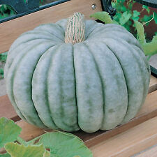 Pumpkin BLUE MOON Seeds ☆ VERY SWEET ☆ 20 Seeds