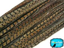 "Pheasant Feathers, 18-20"" Natural Ringneck Pheasant Tail Feathers - 50 Pieces"